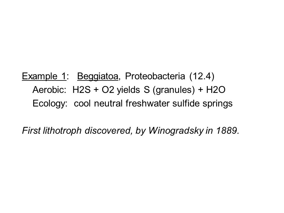 Example 1: Beggiatoa, Proteobacteria (12.4) Aerobic: H2S + O2 yields S (granules) + H2O Ecology: cool neutral freshwater sulfide springs First lithotroph discovered, by Winogradsky in 1889.