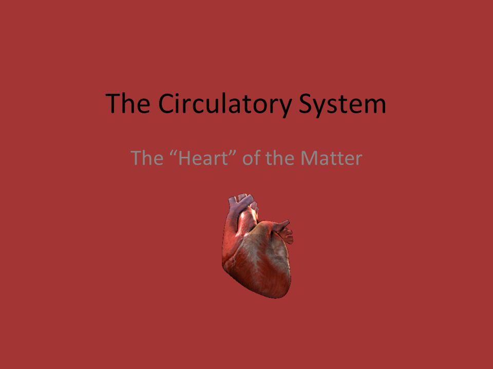 "The Circulatory System The ""Heart"" of the Matter"