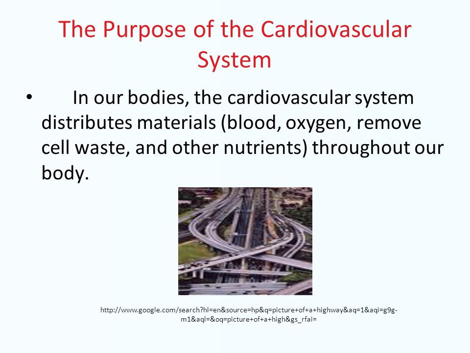 The Purpose of the Cardiovascular System In our bodies, the cardiovascular system distributes materials (blood, oxygen, remove cell waste, and other n