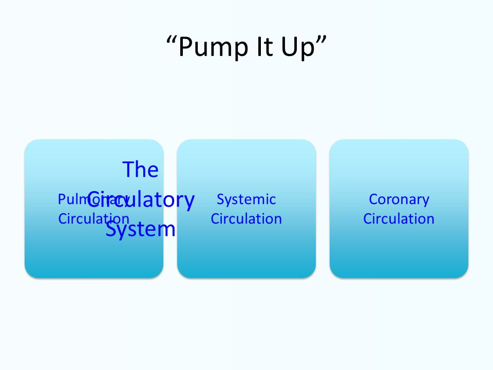 Pump It Up Pulmonary Circulation Systemic Circulation Coronary Circulation The Circulatory System