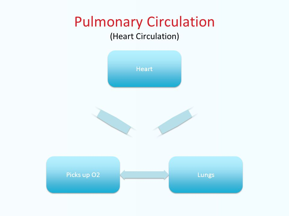 Pulmonary Circulation (Heart Circulation) Heart Lungs Picks up O2