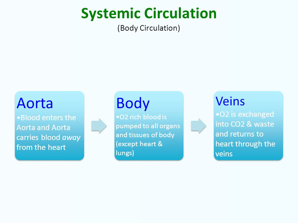 Systemic Circulation (Body Circulation) Aorta Blood enters the Aorta and Aorta carries blood away from the heart Aorta Blood enters the Aorta and Aorta carries blood away from the heart Body O2 rich blood is pumped to all organs and tissues of body (except heart & lungs) Body O2 rich blood is pumped to all organs and tissues of body (except heart & lungs) Veins O2 is exchanged into CO2 & waste and returns to heart through the veins Veins O2 is exchanged into CO2 & waste and returns to heart through the veins