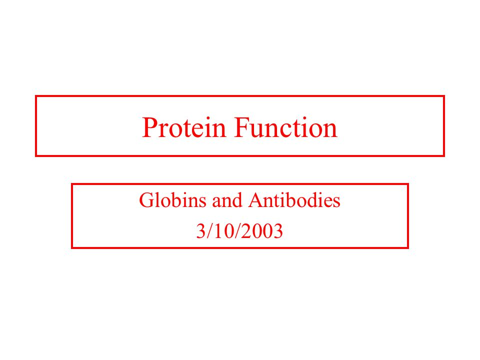 Protein Function Globins and Antibodies 3/10/2003