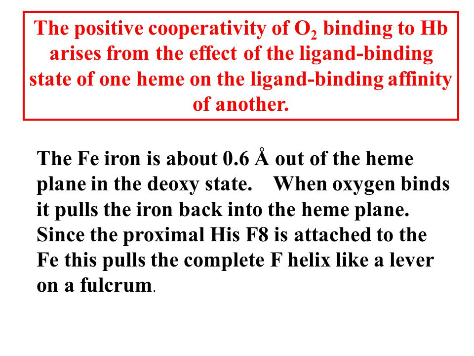 The positive cooperativity of O 2 binding to Hb arises from the effect of the ligand-binding state of one heme on the ligand-binding affinity of another.