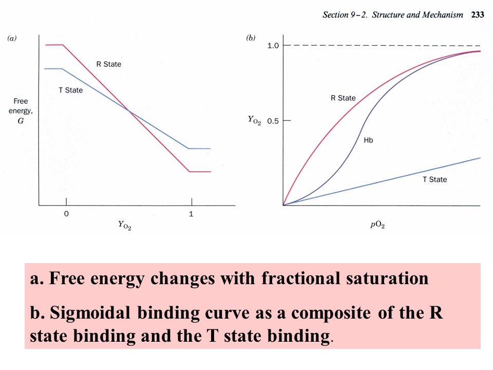 a. Free energy changes with fractional saturation b.