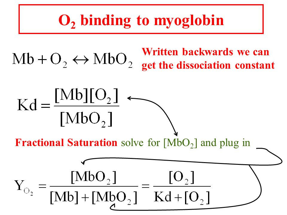O 2 binding to myoglobin Written backwards we can get the dissociation constant Fractional Saturation solve for [MbO 2 ] and plug in