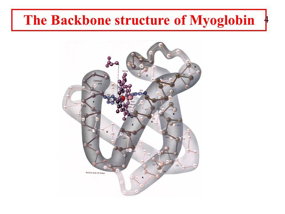 The Backbone structure of Myoglobin 4