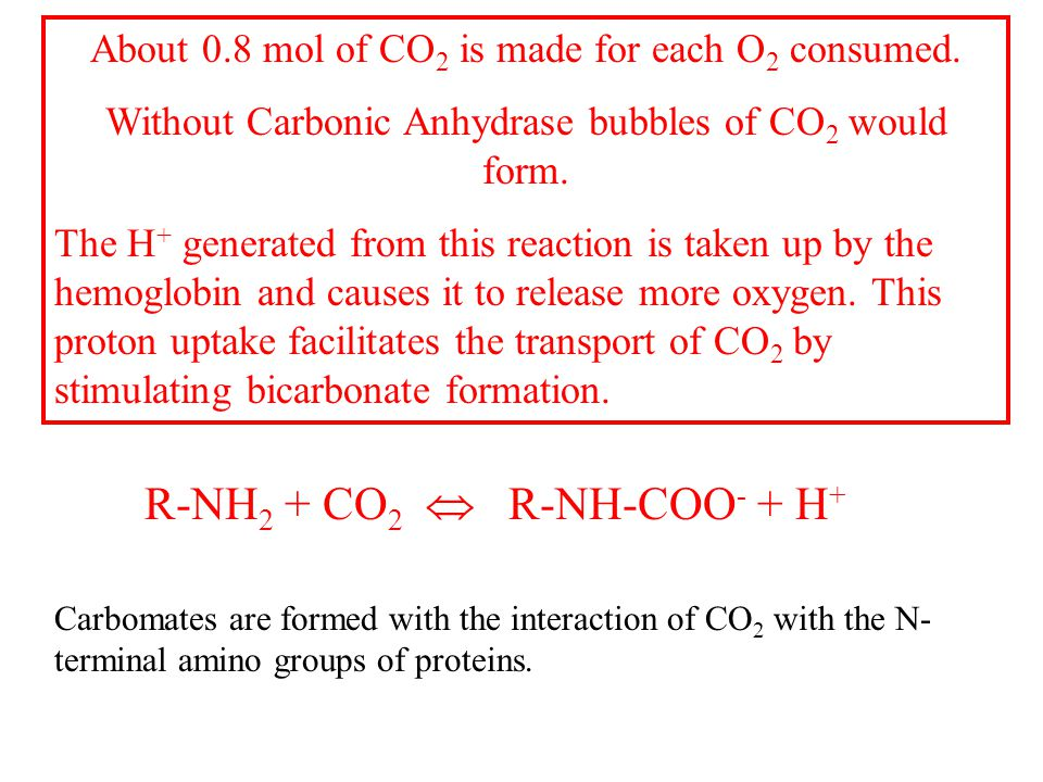 About 0.8 mol of CO 2 is made for each O 2 consumed.