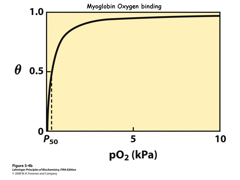 Myoglobin Oxygen binding