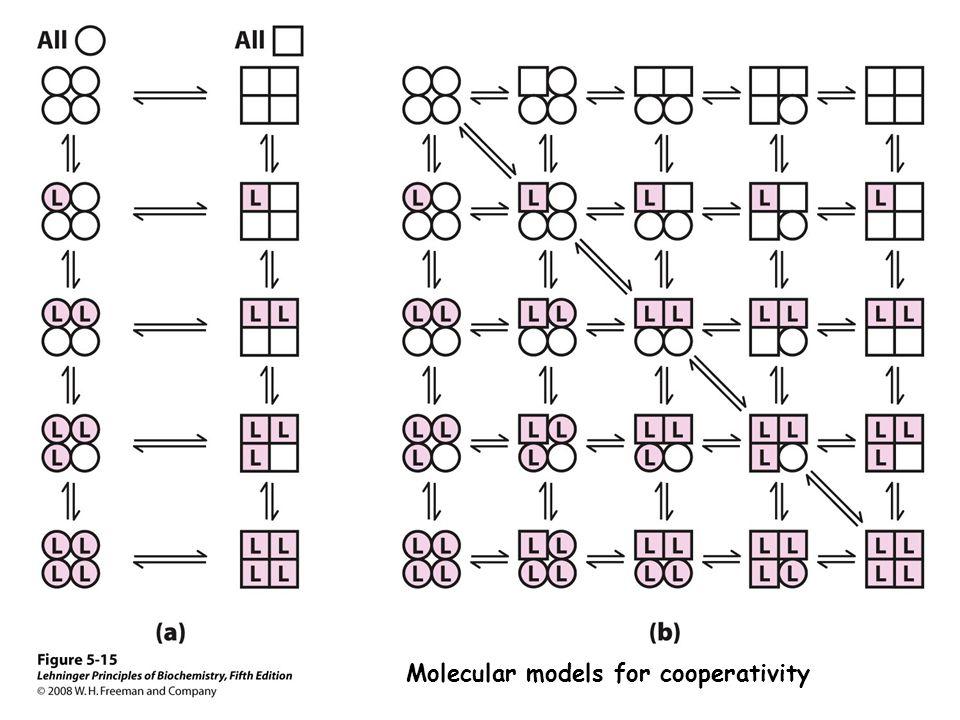 Molecular models for cooperativity