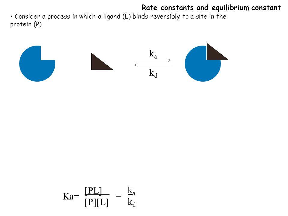 Rate constants and equilibrium constant Consider a process in which a ligand (L) binds reversibly to a site in the protein (P) kaka kdkd Ka= [PL] [P][L] = kakdkakd