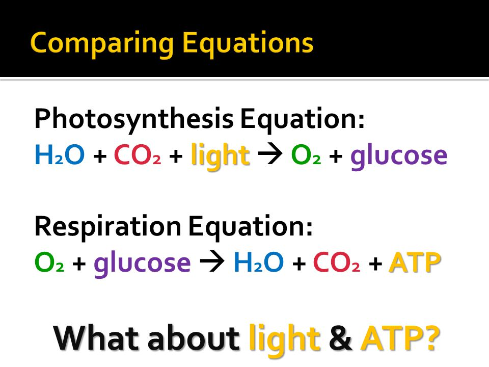 Photosynthesis Equation: light H 2 O + CO 2 + light  O 2 + glucose Respiration Equation: ATP O 2 + glucose  H 2 O + CO 2 + ATP What about light & AT