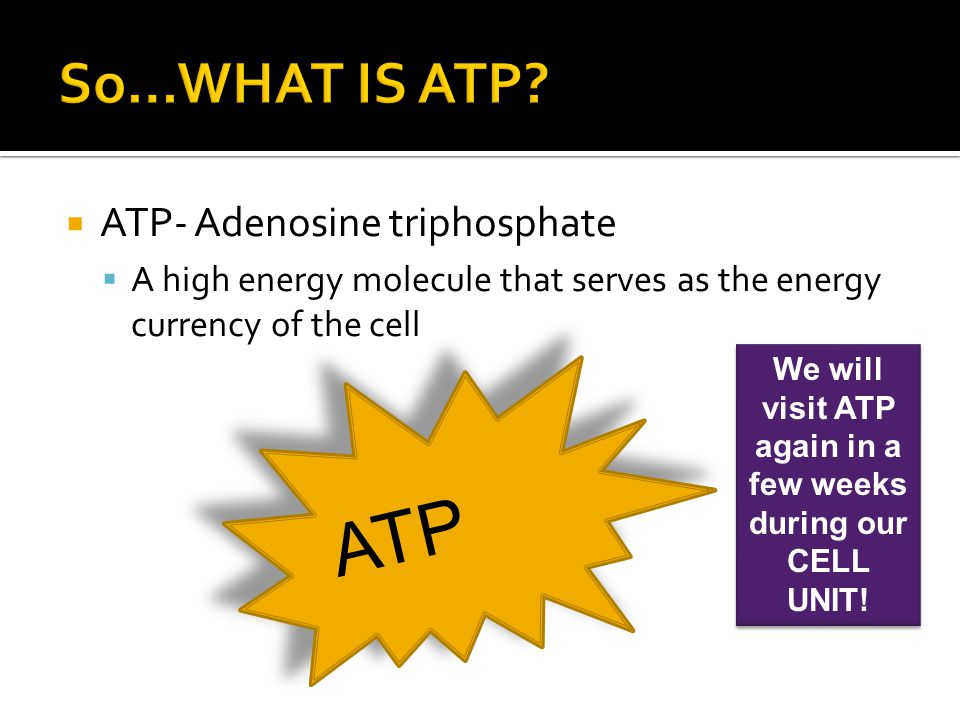  ATP- Adenosine triphosphate  A high energy molecule that serves as the energy currency of the cell ATP We will visit ATP again in a few weeks durin