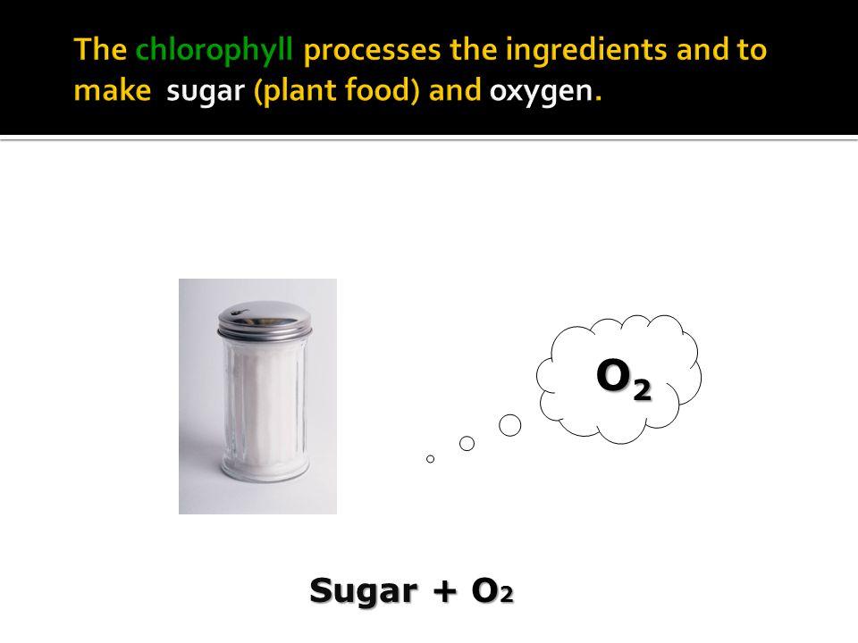 Sugar + O 2 O2O2O2O2