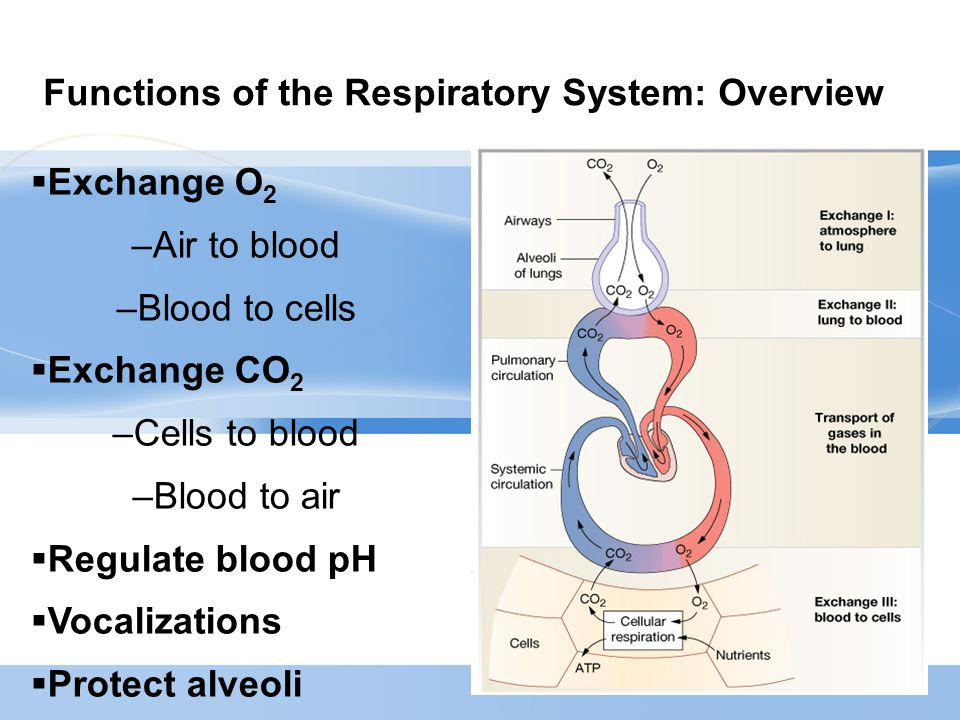 Page  20 Oxygen therapy – complications/cautions  Respiratory depression if hypoxic drive  Pulmonary oxygen toxicity  Tracheobronchitis  Absorption atelectasis  Fire  Variable delivery