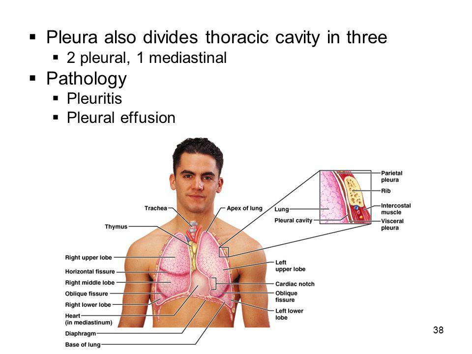 38  Pleura also divides thoracic cavity in three  2 pleural, 1 mediastinal  Pathology  Pleuritis  Pleural effusion