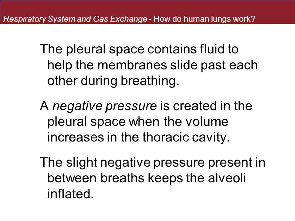 The pleural space contains fluid to help the membranes slide past each other during breathing.