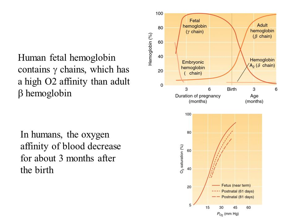 Human fetal hemoglobin contains  chains, which has a high O2 affinity than adult  hemoglobin In humans, the oxygen affinity of blood decrease for ab