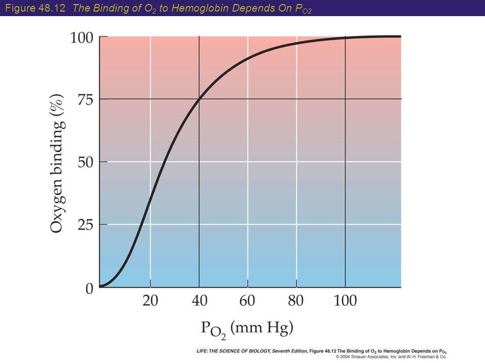 Figure 48.12 The Binding of O 2 to Hemoglobin Depends On P O2