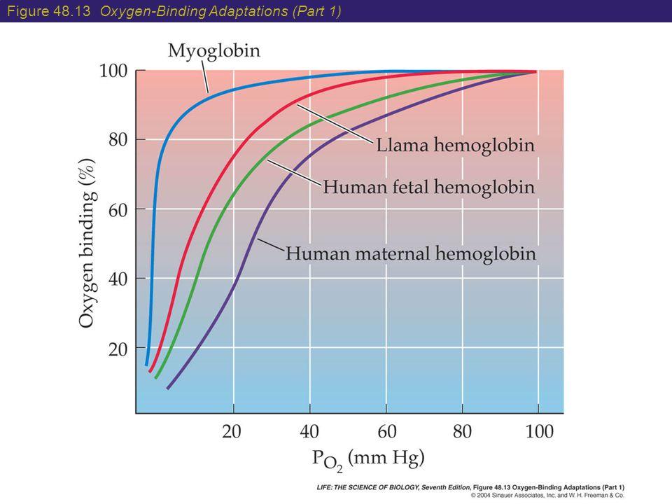 Figure 48.13 Oxygen-Binding Adaptations (Part 1)