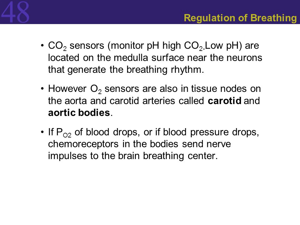 48 Regulation of Breathing CO 2 sensors (monitor pH high CO 2- Low pH) are located on the medulla surface near the neurons that generate the breathing