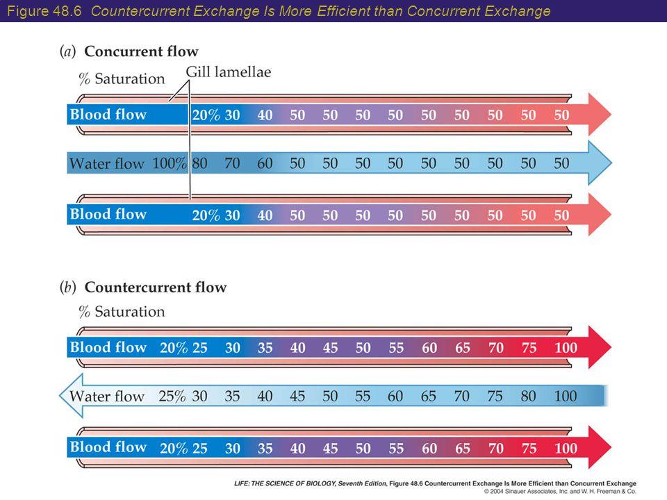 Figure 48.6 Countercurrent Exchange Is More Efficient than Concurrent Exchange