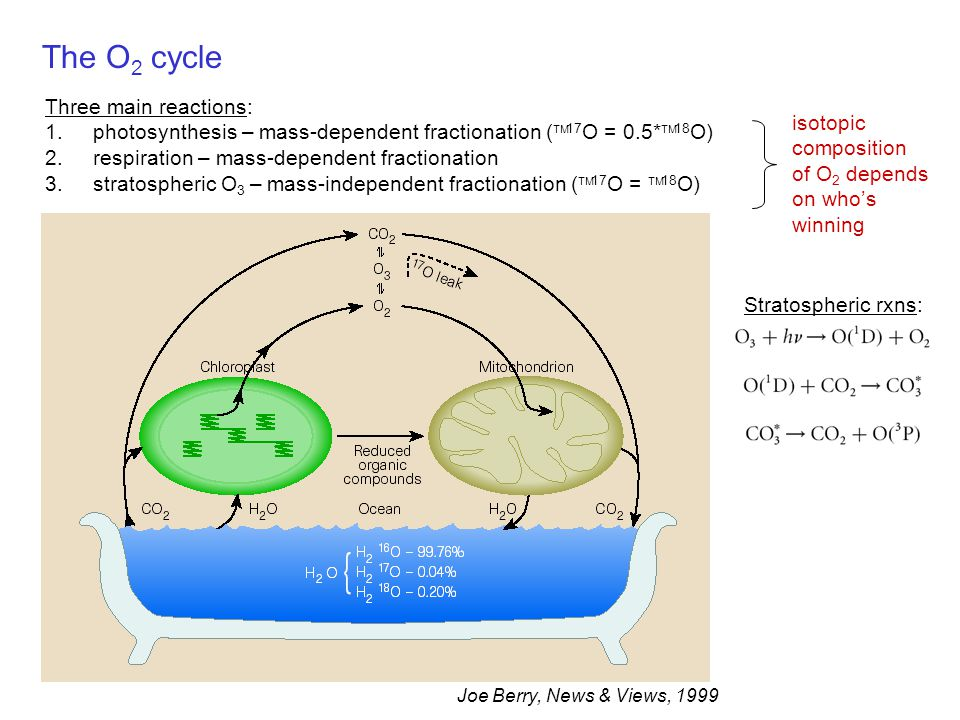 The O 2 cycle Joe Berry, News & Views, 1999 Three main reactions: 1.photosynthesis – mass-dependent fractionation (  17 O = 0.5*  18 O) 2.respiratio