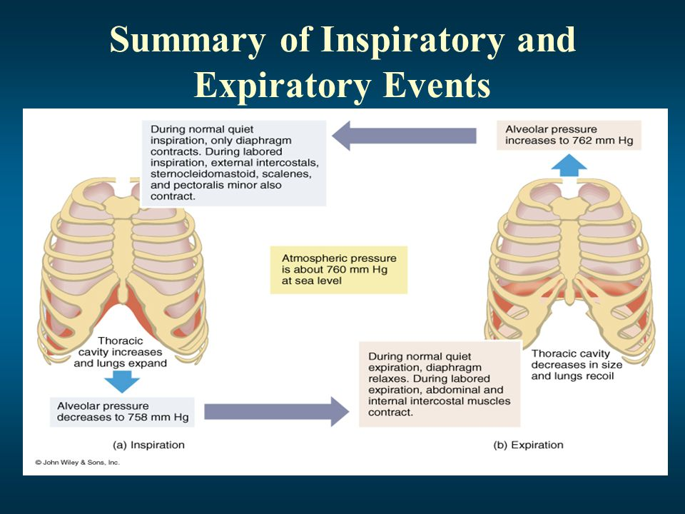 Factors Affecting Pulmonary Ventilation Surface Tension Surfactant decreases surface tension thus preventing alveolar collapse Compliance High compliance means the lungs and thoracic wall expand easily Low compliance means that they resist expansion
