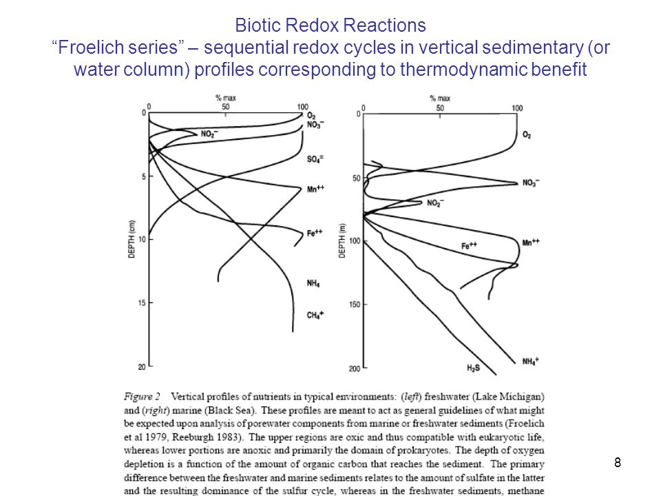 "Biotic Redox Reactions ""Froelich series"" – sequential redox cycles in vertical sedimentary (or water column) profiles corresponding to thermodynamic b"