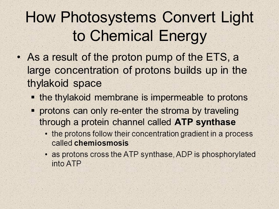 How Photosystems Convert Light to Chemical Energy The electron transport system (ETS) receives the excited electron from the electron acceptor  the ETS is comprised of proteins that are embedded in the thylakoid membrane  one of these proteins acts as a proton pump to move a proton from the stroma into the thylakoid space  at the end of the ETS, the electron is passed to the reaction center of photosystem I