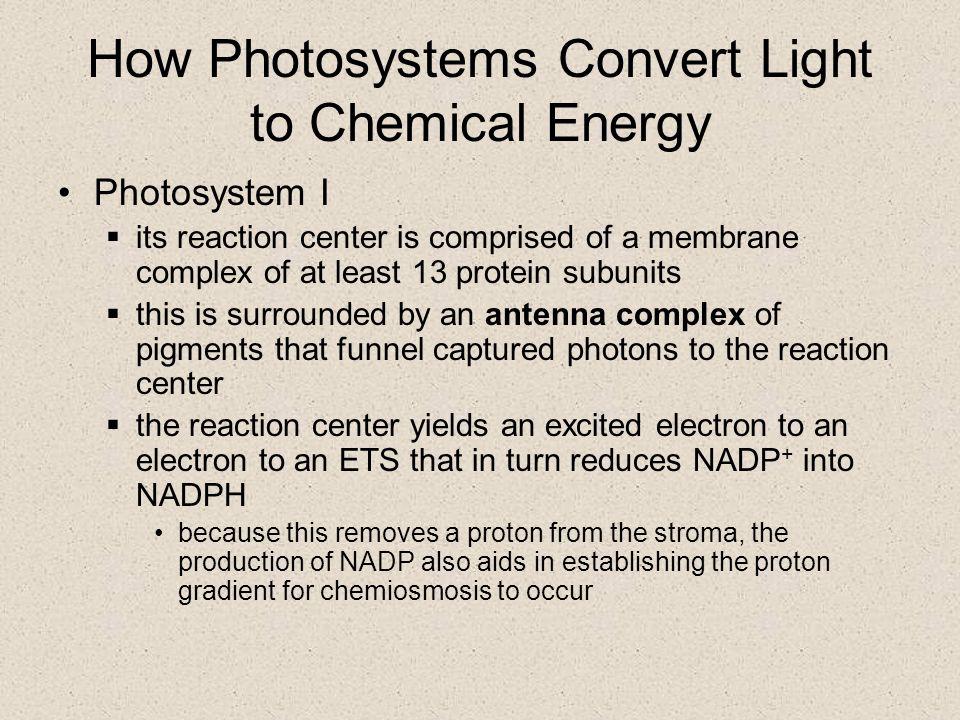 Chemiosmosis in a chloroplast