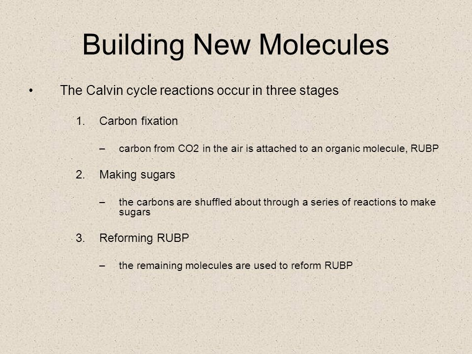 Building New Molecules Cells use the products of the light-dependent reactions to build organic molecules  ATP is needed to drive endergonic reactions  NADPH is needed to provide reducing power in the form of hydrogens The synthesis of new molecules employs the light-independent, or Calvin cycle, reactions  these reactions are also known as C 3 photosynthesis
