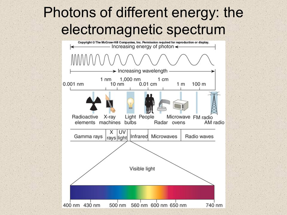 How Plants Capture Energy from Sunlight Light is comprised of packets of energy called photons  sunlight has photons of varying energy levels the possible range of energy levels is represented by an electromagnetic spectrum  human eyes only perceive photons of intermediate energy levels this range of the spectrum is known as visible light