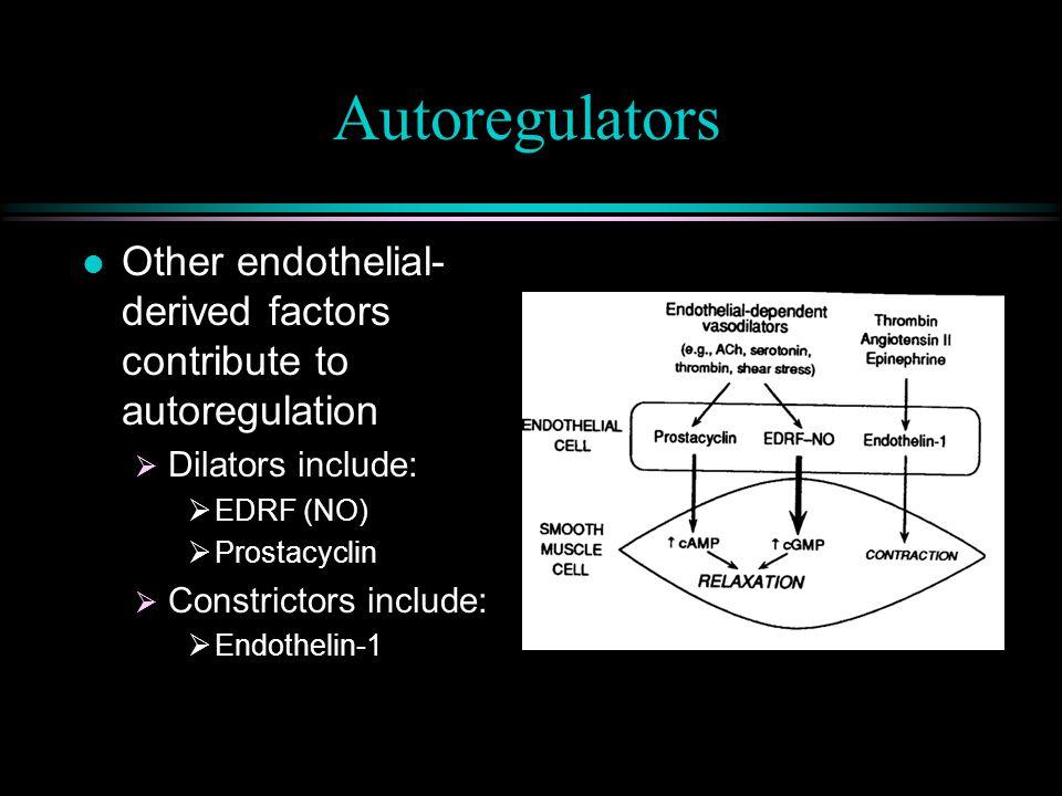 Autoregulatory Resistance Coronary Perfusion Pressure (mmHg) Flow cc/100g /min 6013010011580 Control Adenosine 0 200 100