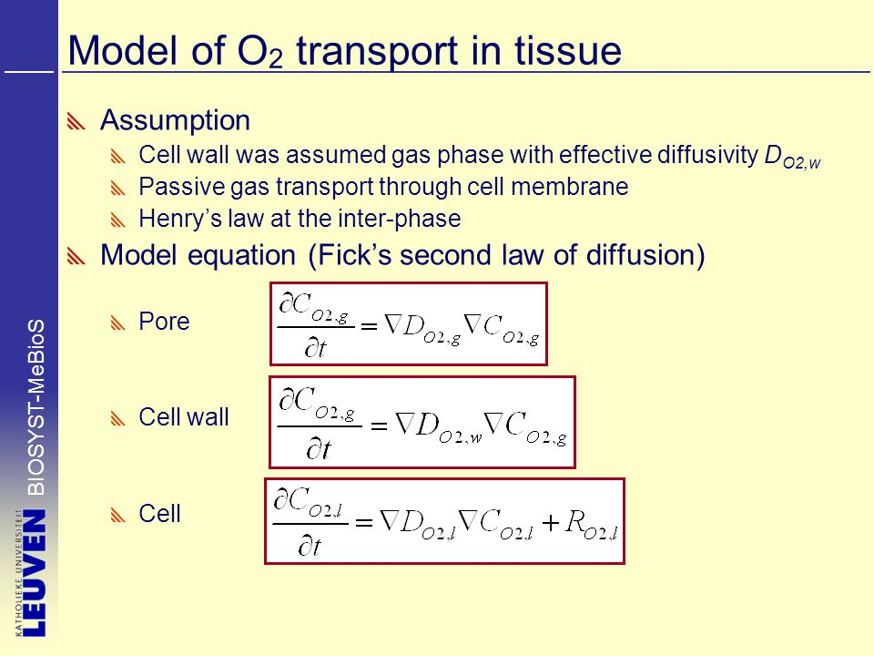 BIOSYST-MeBioS Model of O 2 transport in tissue Assumption Cell wall was assumed gas phase with effective diffusivity D O2,w Passive gas transport through cell membrane Henry's law at the inter-phase Model equation (Fick's second law of diffusion) Pore Cell wall Cell