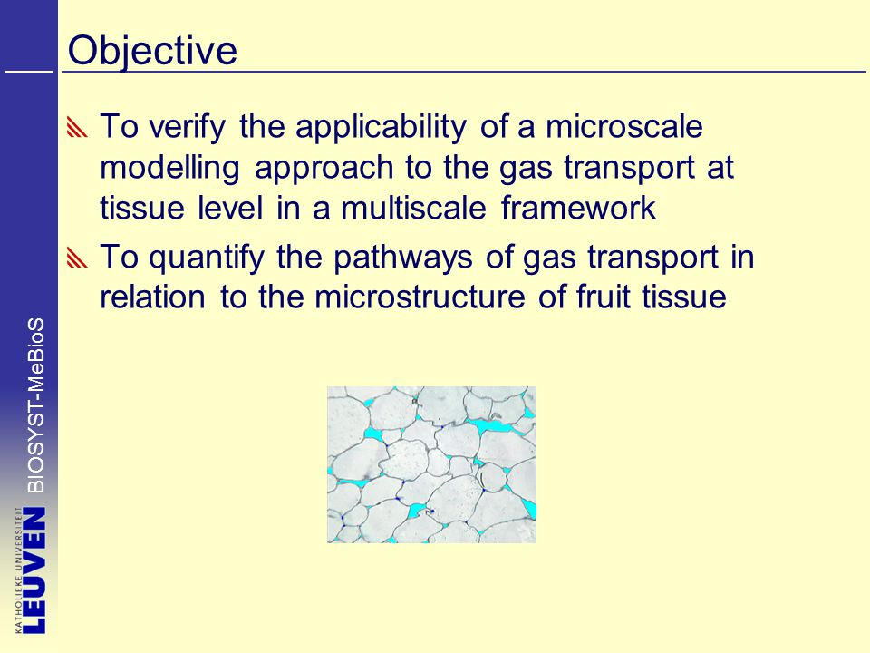 BIOSYST-MeBioS Objective To verify the applicability of a microscale modelling approach to the gas transport at tissue level in a multiscale framework To quantify the pathways of gas transport in relation to the microstructure of fruit tissue