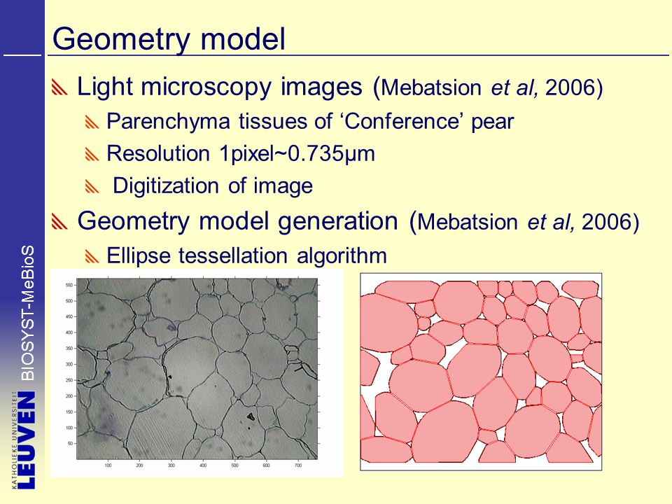 BIOSYST-MeBioS Geometry model Light microscopy images ( Mebatsion et al, 2006) Parenchyma tissues of 'Conference' pear Resolution 1pixel~0.735µm Digit