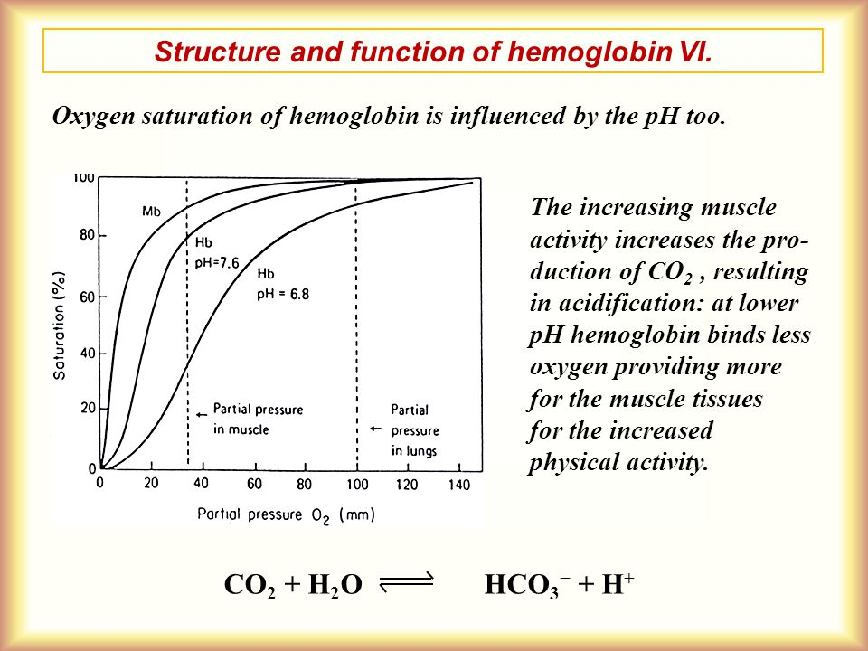 Structure and function of hemoglobin VI.