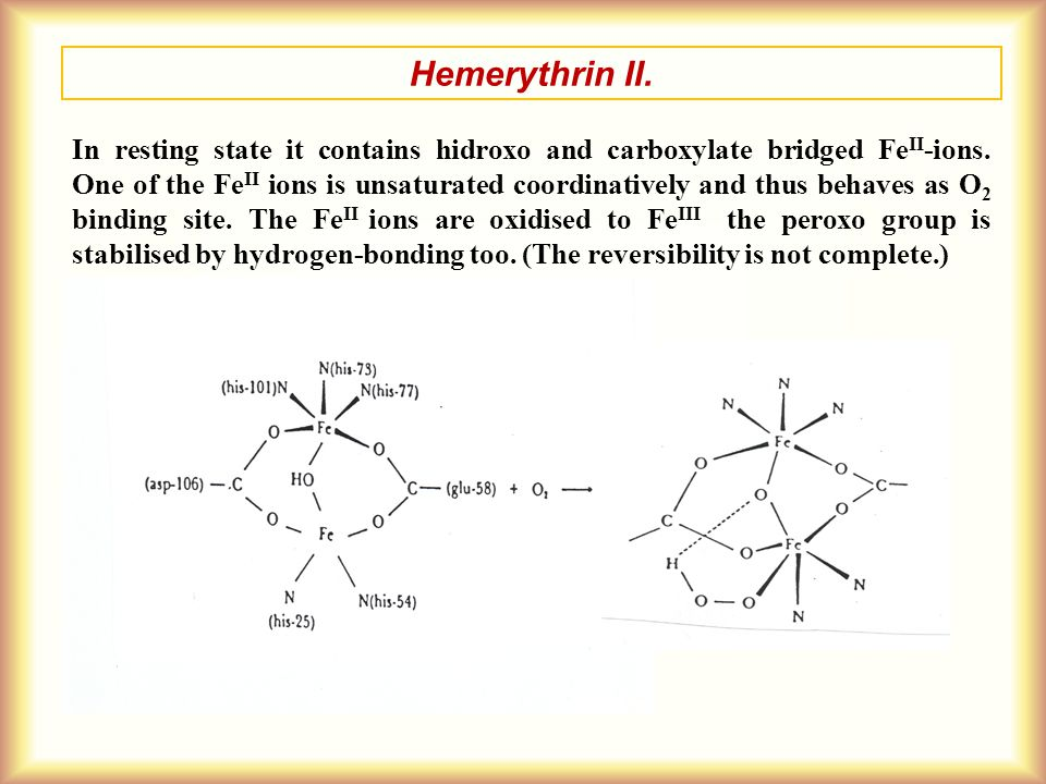 Hemerythrin II. In resting state it contains hidroxo and carboxylate bridged Fe II -ions. One of the Fe II ions is unsaturated coordinatively and thus