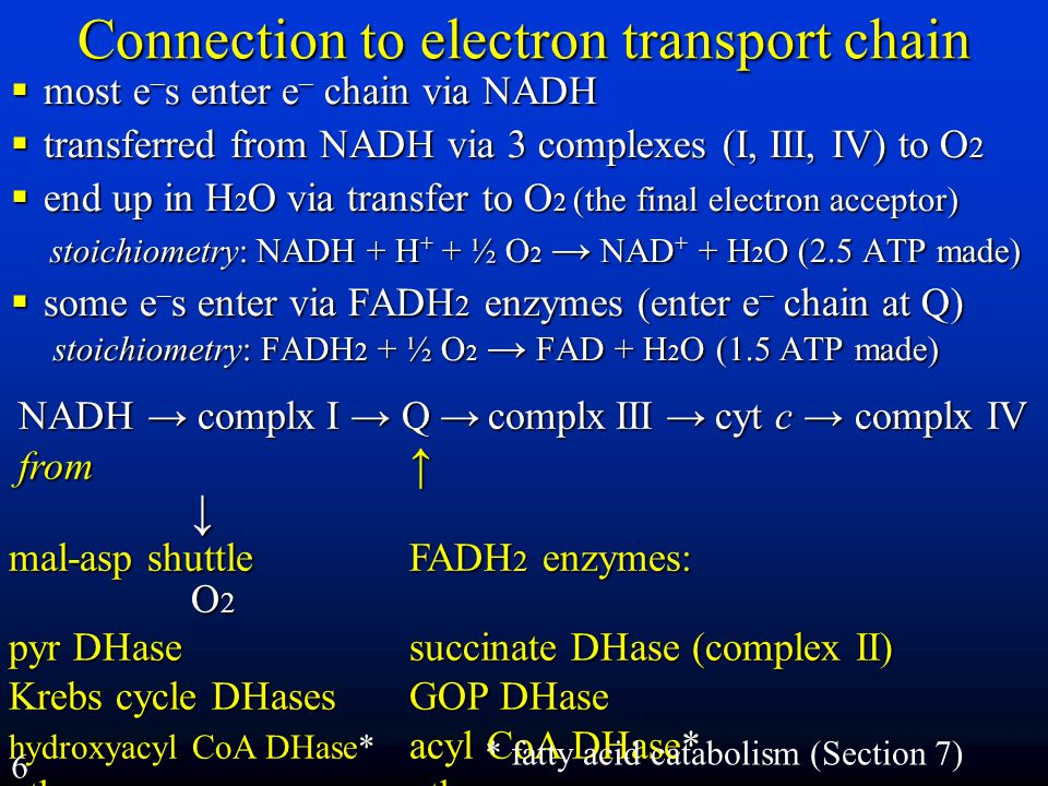 Connection to electron transport chain  most e – s enter e – chain via NADH  transferred from NADH via 3 complexes (I, III, IV) to O 2  end up in H 2 O via transfer to O 2 (the final electron acceptor) stoichiometry: NADH + H + + ½ O 2 → NAD + + H 2 O (2.5 ATP made)  some e – s enter via FADH 2 enzymes (enter e – chain at Q) stoichiometry: FADH 2 + ½ O 2 → FAD + H 2 O (1.5 ATP made) NADH →complx I →Q → complx III → cyt c → complx IV NADH → complx I → Q → complx III → cyt c → complx IV from ↑  ↓ from ↑  ↓ mal-asp shuttle FADH 2 enzymes:  O 2 pyr DHase succinate DHase (complex II) Krebs cycle DHases GOP DHase hydroxyacyl CoA DHase* acyl CoA DHase* others others * fatty acid catabolism (Section 7) Lehninger 3ed Fig 19-8 6