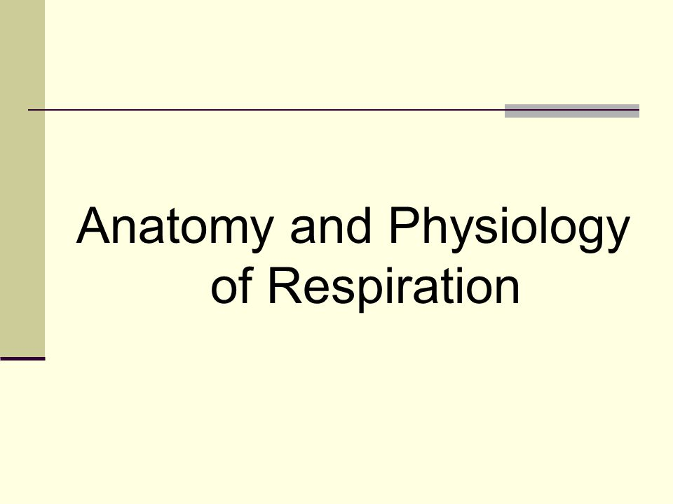 Anatomy and Physiology of Respiration