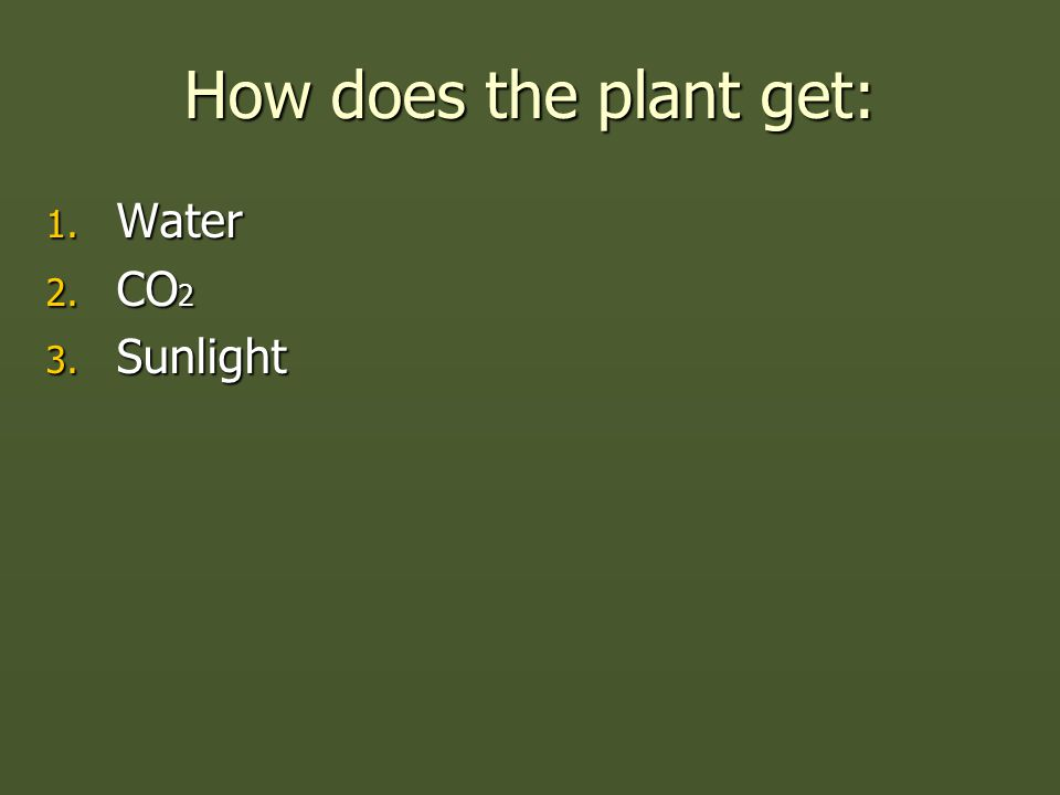 How does the plant get: 1. Water 2. CO 2 3. Sunlight
