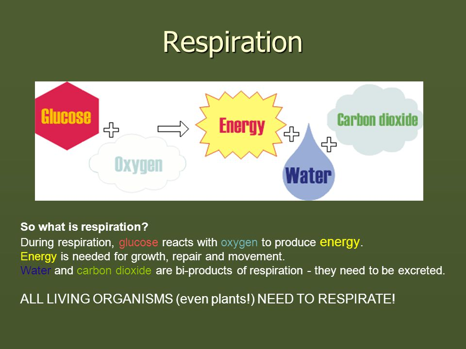 Respiration So what is respiration? During respiration, glucose reacts with oxygen to produce energy. Energy is needed for growth, repair and movement