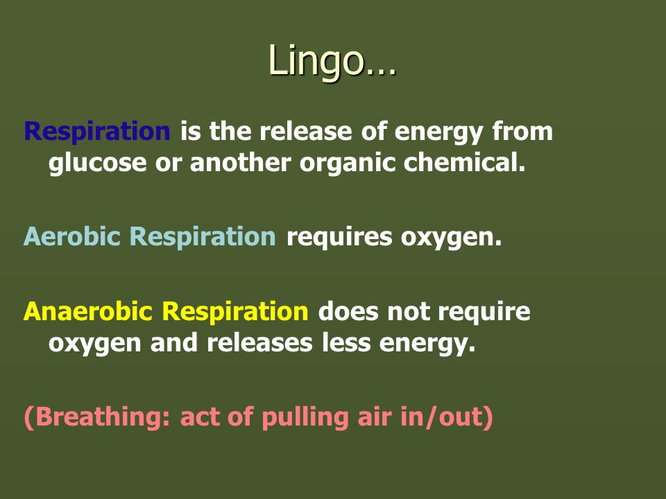 Lingo… Respiration is the release of energy from glucose or another organic chemical.