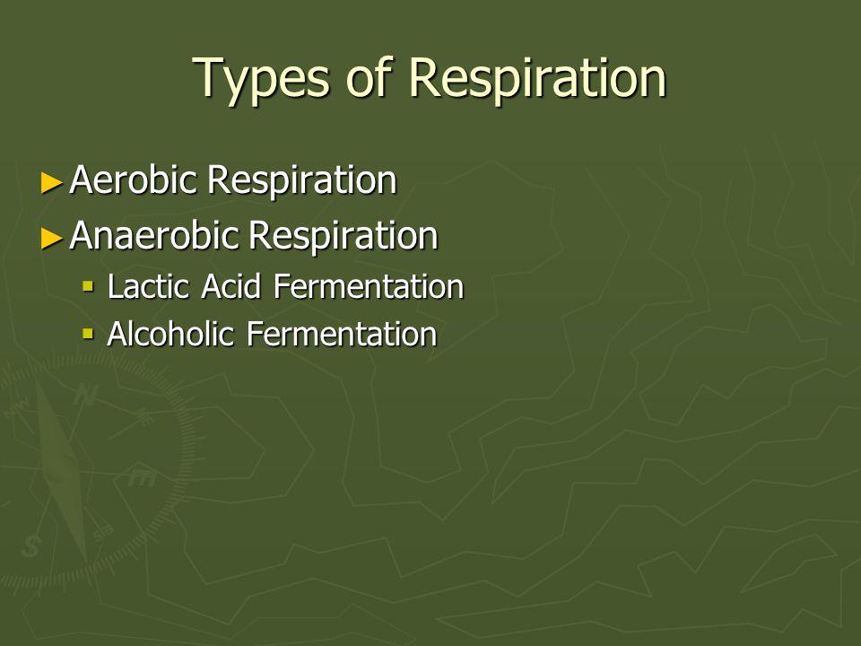 Types of Respiration ► Aerobic Respiration ► Anaerobic Respiration  Lactic Acid Fermentation  Alcoholic Fermentation