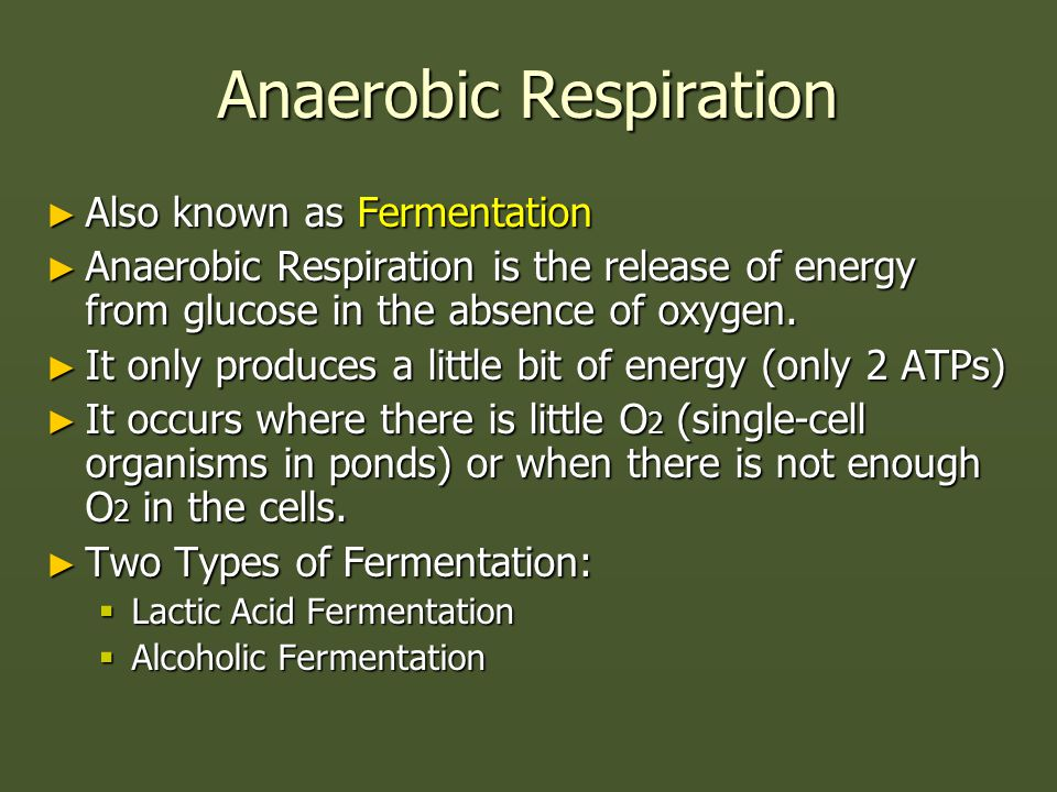 Anaerobic Respiration ► Also known as Fermentation ► Anaerobic Respiration is the release of energy from glucose in the absence of oxygen.