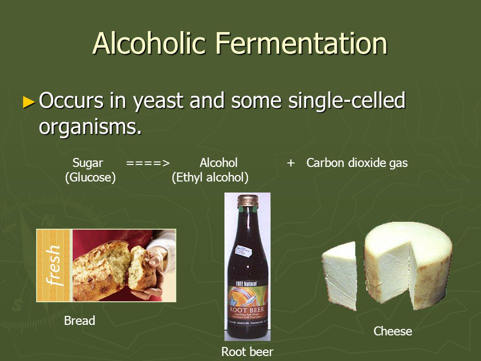 Alcoholic Fermentation ► Occurs in yeast and some single-celled organisms. Sugar ====> Alcohol + Carbon dioxide gas (Glucose) (Ethyl alcohol) Bread Ro