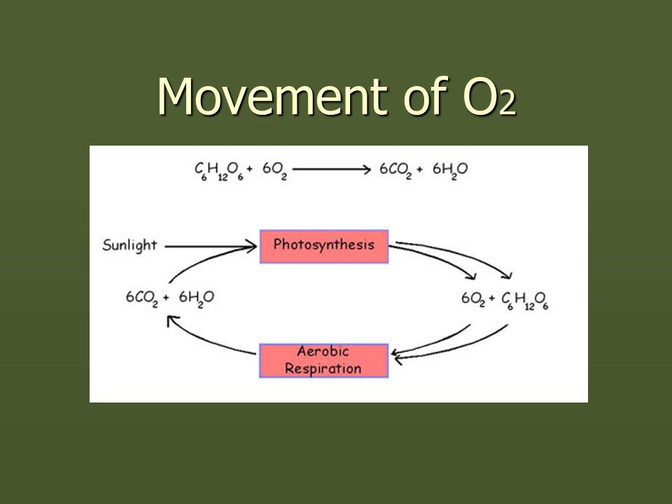 Movement of O 2