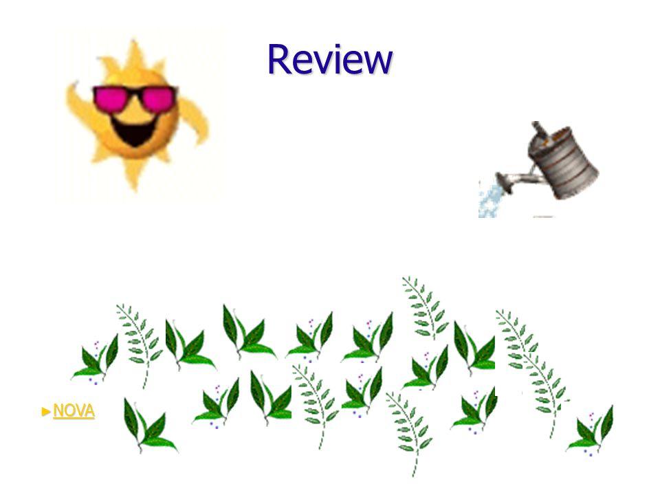 Review ► NOVA NOVA