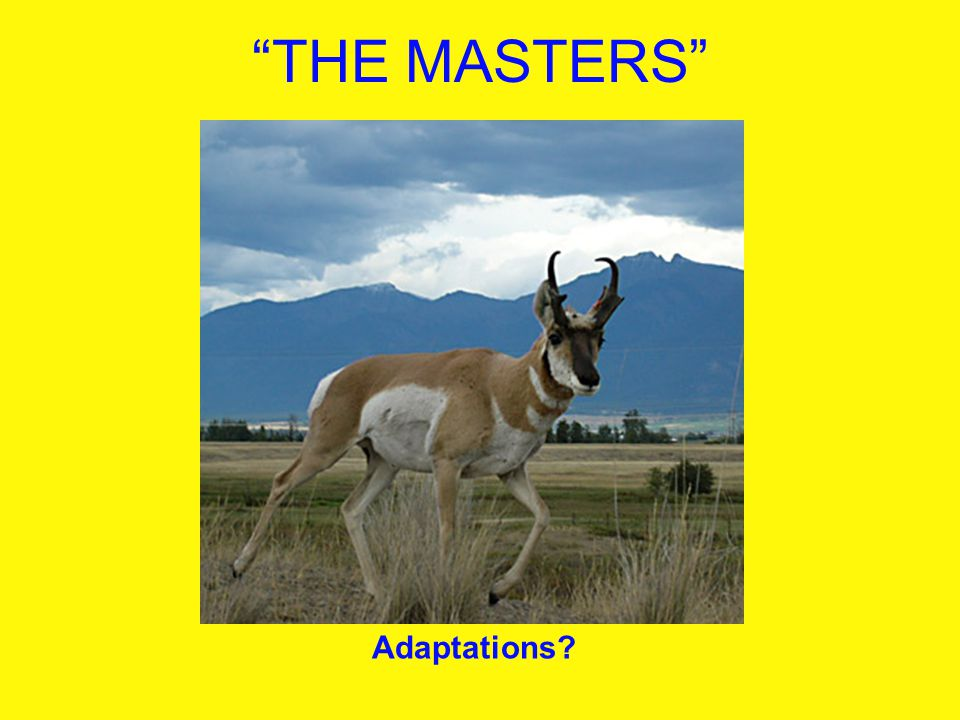 THE MASTERS Adaptations
